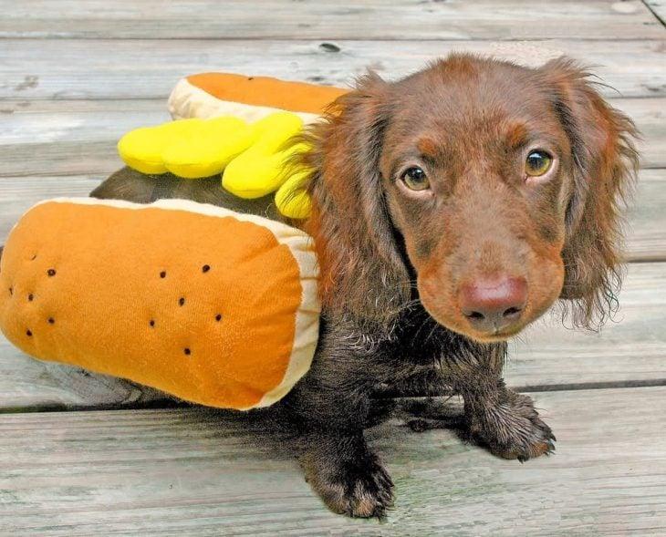 Perro disfrazado de hot dog