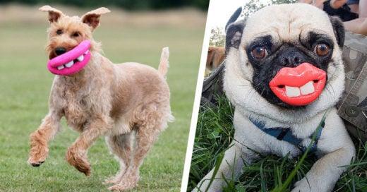 20 perros que no se han dado cuenta de los