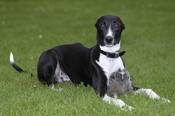 perro sentado en el jardín junto a un búho