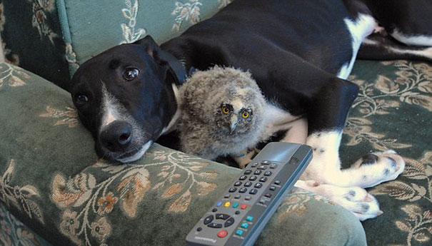 perro y búho recostados en el sillón viendo la televisión