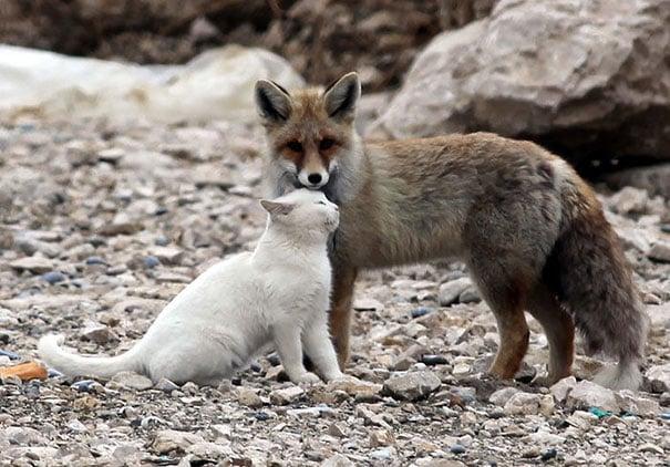 zorro junto a un gato parados en unas piedras