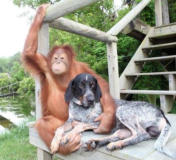 orangutan abrazando a un perro