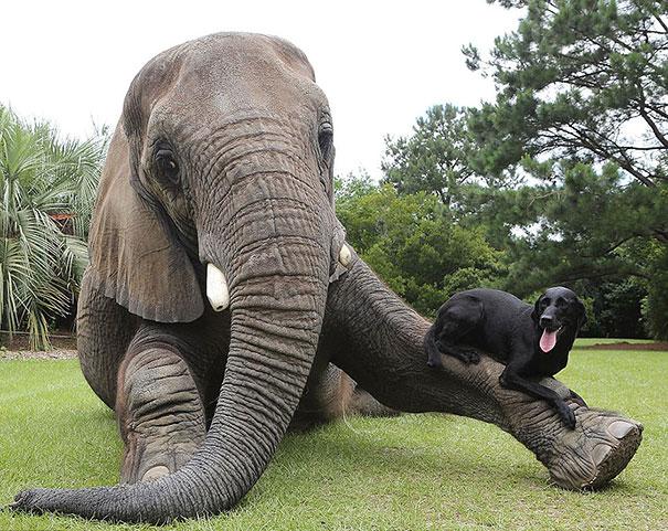 elefante sobre un elefante