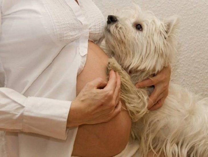 perros y embarazadas (17)
