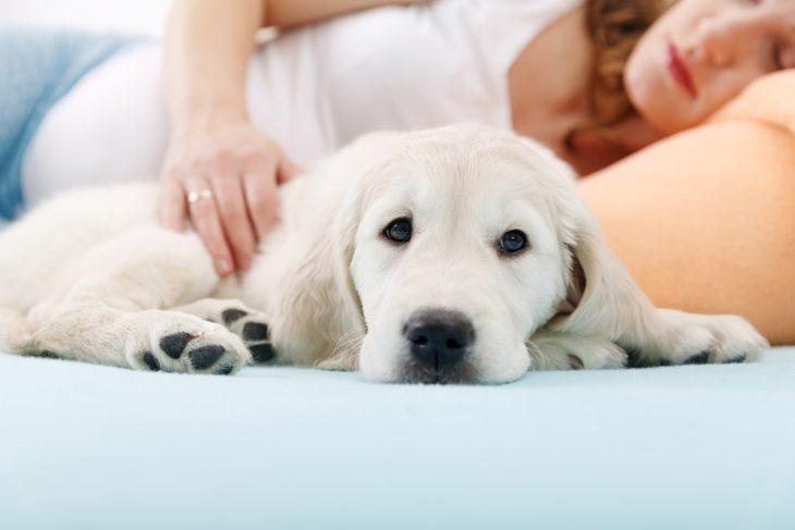 perros y embarazadas (31)