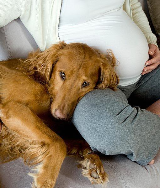 perros y embarazadas (5)