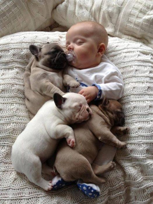 cachorros pug recostados junto a un bebé