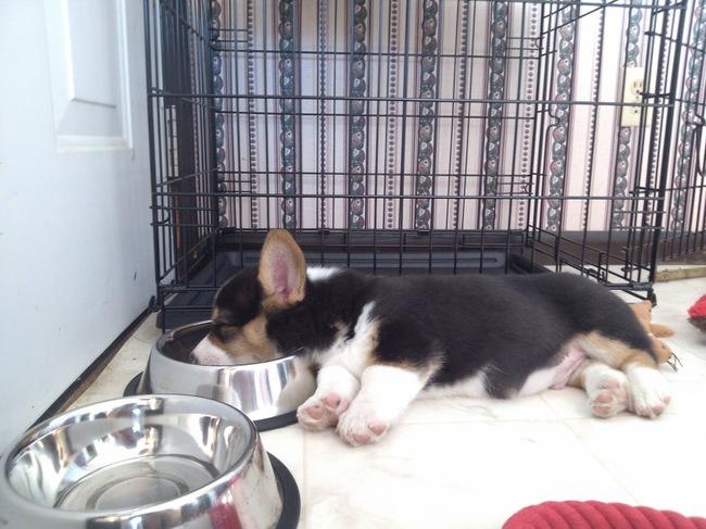 perrito recostado sobre el tazón de su comida
