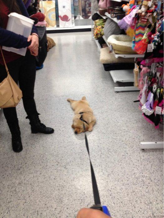 perrito siendo jalado por una correa mientras camina por los pasillos de una tienda