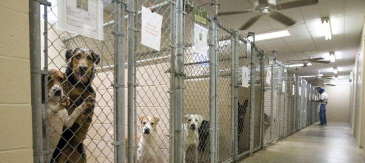 perritos que están en un refugio