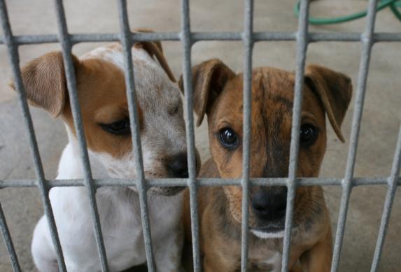 cachorros tras una reja