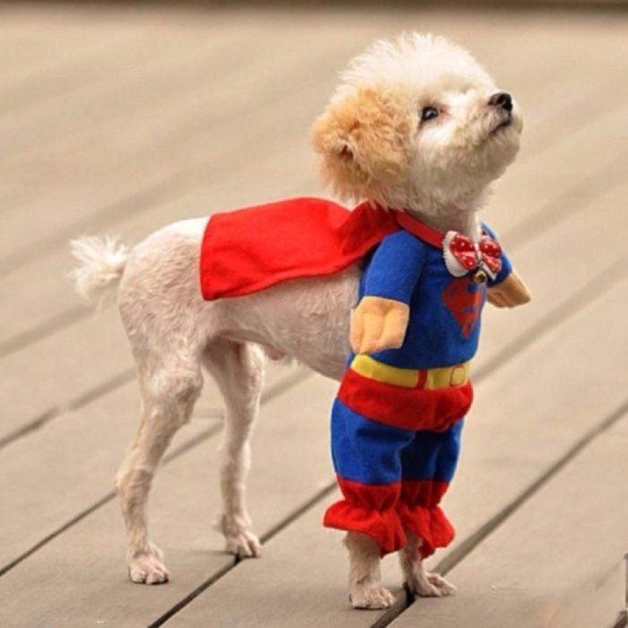 perrito con un traje de super héroe parado en el suelo de una casa