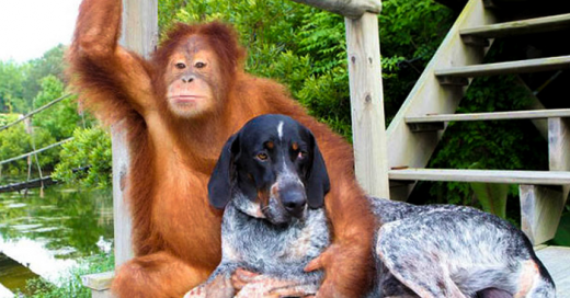 15 inusuales AMISTADES entre animales que te derretirán el corazón