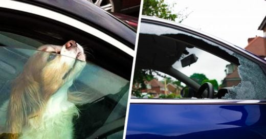 Ahora en Tennessee es LEGAL romper la ventana de un auto para SALVAR a una mascota