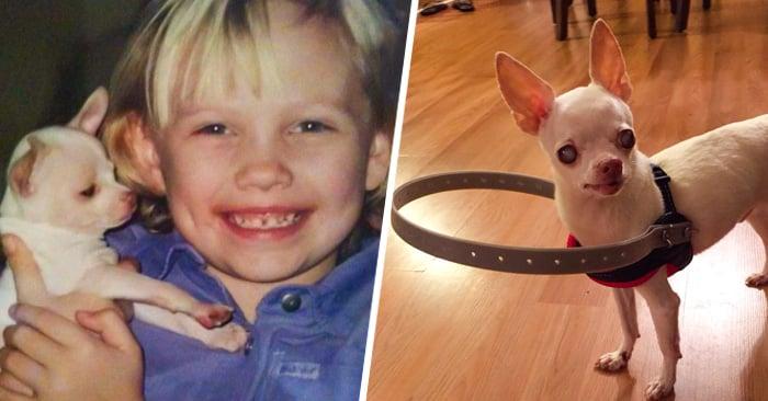 Un perro se quedó completamente CIEGO, pero su familia hizo algo SORPRENDENTE que le cambió la vida