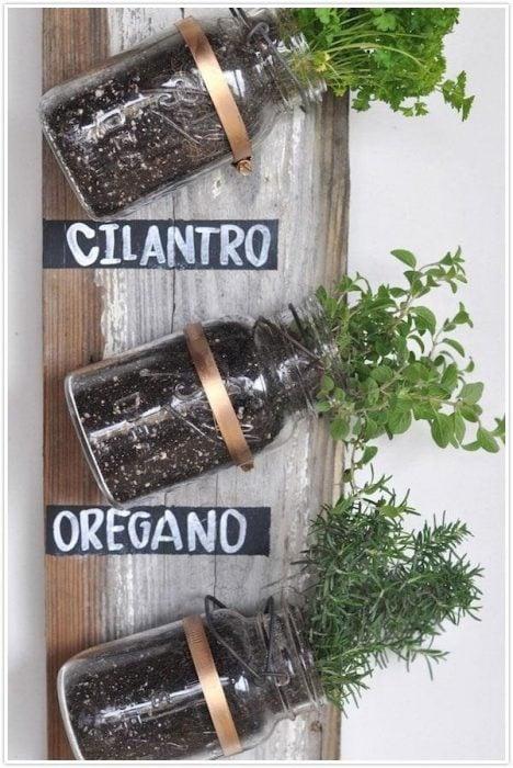 Cultivos de cilantro y oregano
