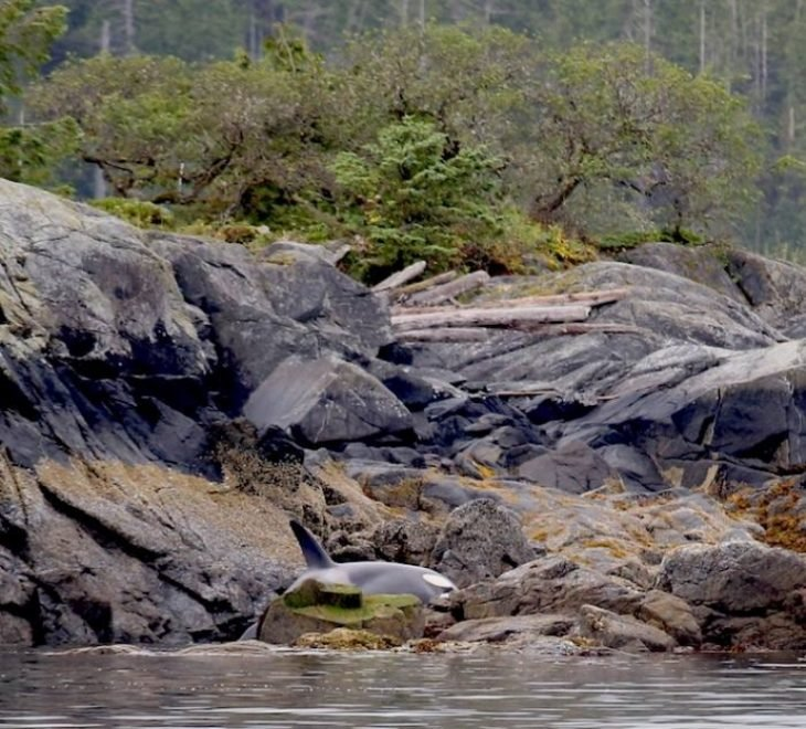 Orca varada en la bahía