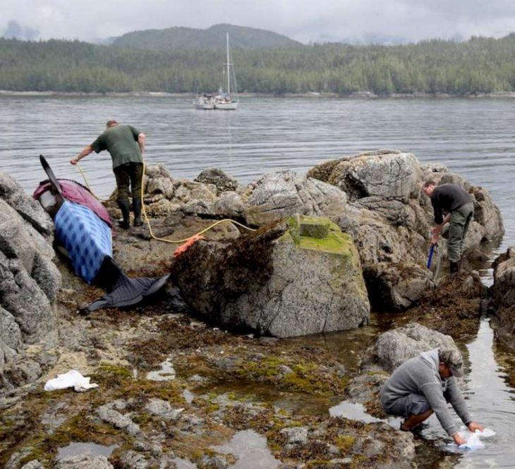 Rescatistas manteniendo húmeda a orca varada