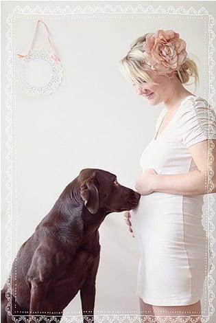 perro viendo la panza de una mujer que esta embarazada
