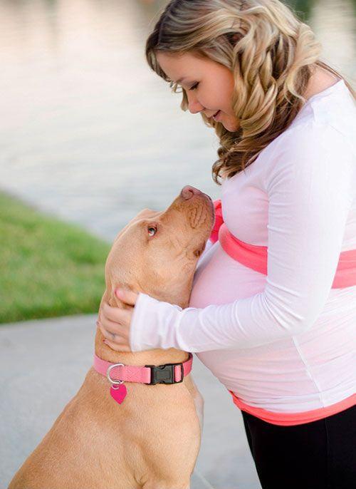 perra viendo a su dueña que esta embarazada a los ojos