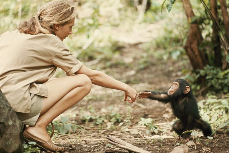 Chica dándole la mano a un chimpancé