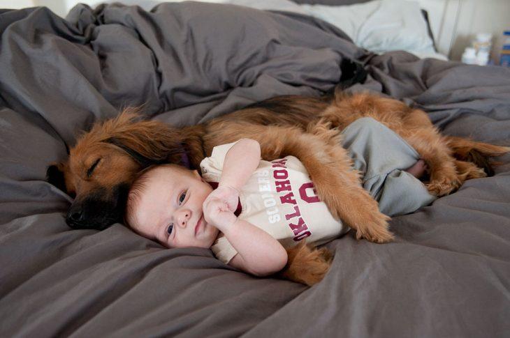 Perro y bebé dormidos en la misma cama