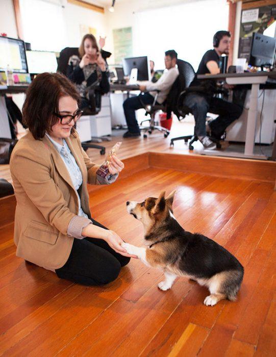 perro con su dueña en la oficina