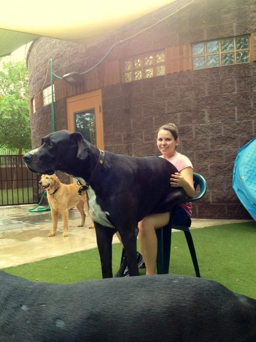 Perro sentado encima de su dueña