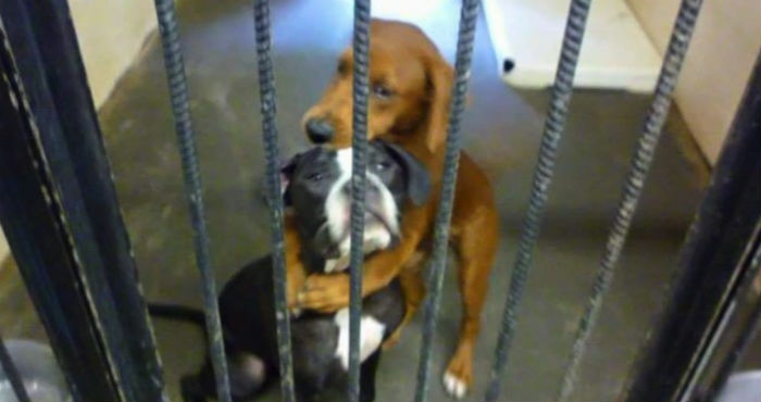 perros abrazados tras una jaula en un refugio en estados unidos