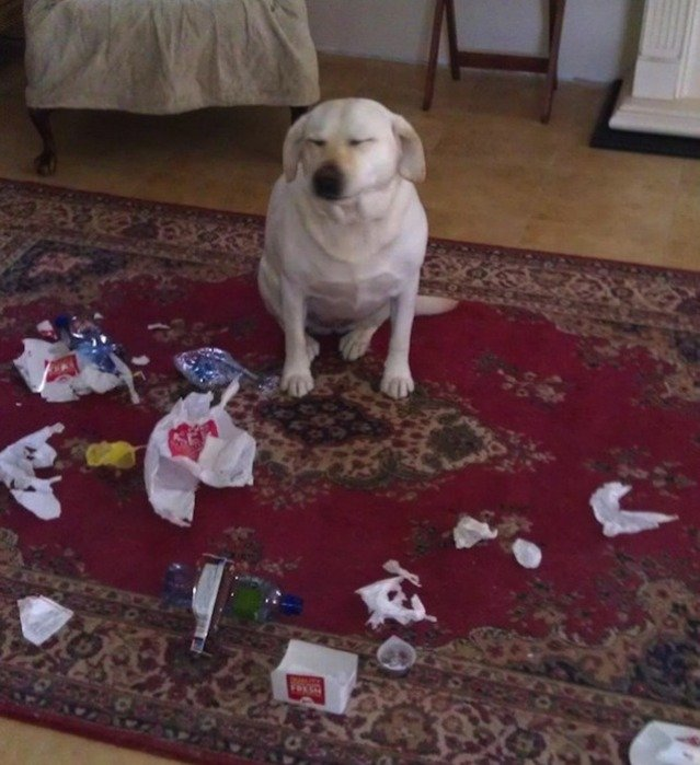 Perro que rompió la basura