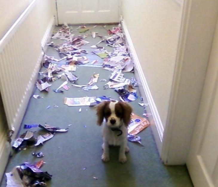 Perro que rompió una revista