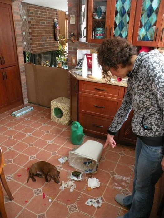 Mujer regañando a su perro que tiró la basura