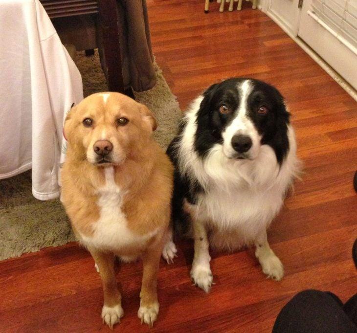 Perros con cara de arrepentimiento
