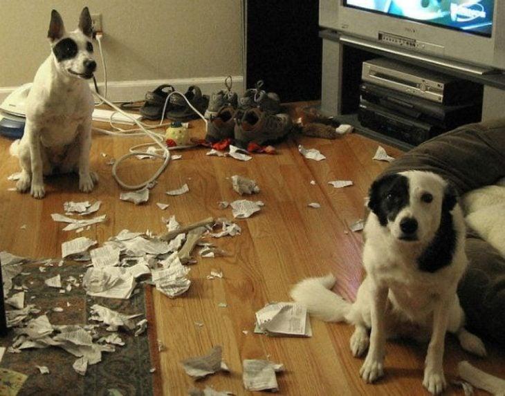 Perros que rompieron el periódico