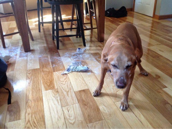Perro que rompió la bolsa de jabón