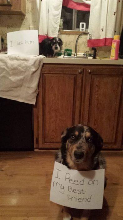 Perros con letreros