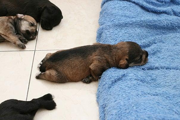 perrito dormido sobre un cojín