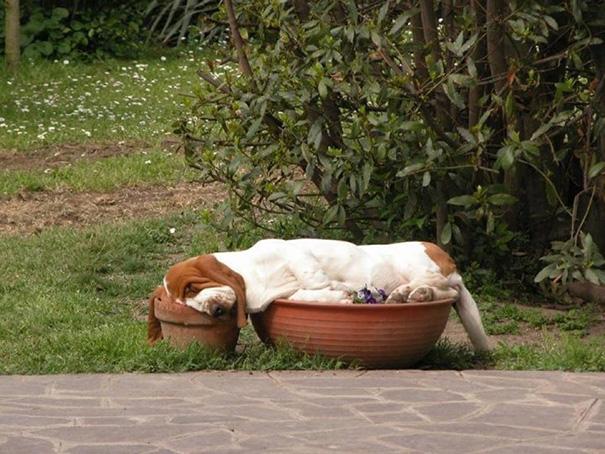 perrito dormido sobre unas macetas