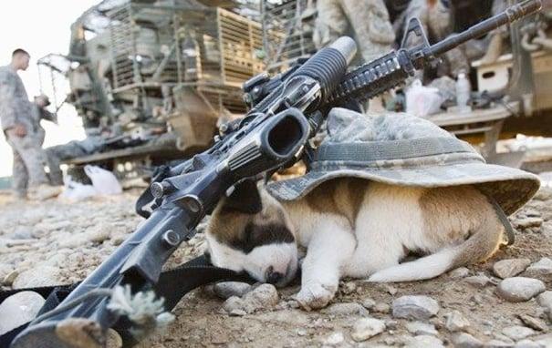 perrito dormido en una zona de guerra protegido por un casco