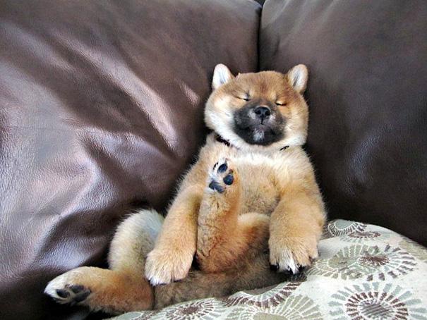 perrito dormido en un sofá con una patita hacia arriba