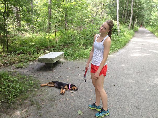 perrito dormido mientras fue a dar un paseo