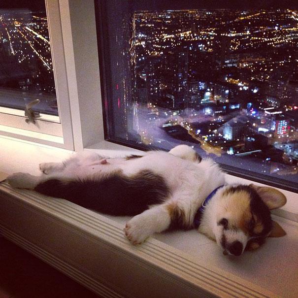 perrito dormido viendo las luces de la ciudad