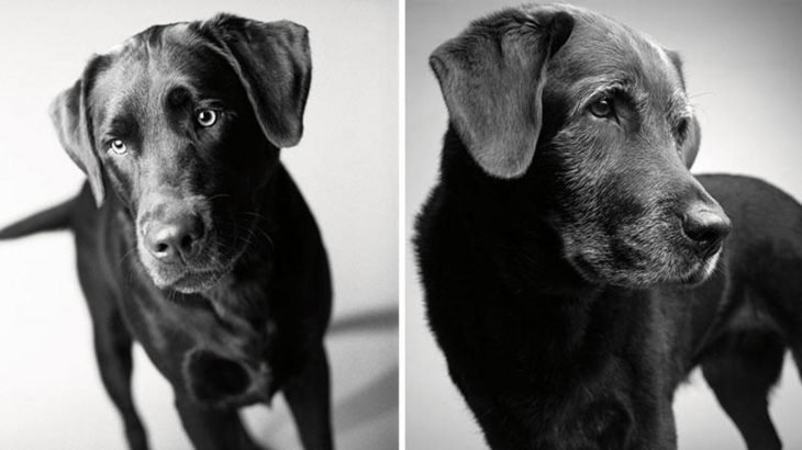 Retrato de un perro durante su vida de cachorro y después en su vida adulta