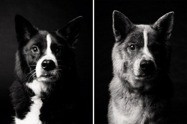 Perrito cuando era cachorro y después en su vida adulta