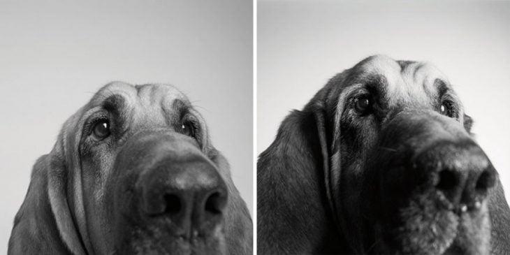 retratos de perros cuando eran más pequeños y después cuando eran adultos