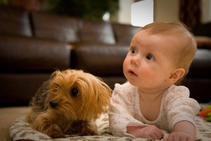 Perro cachorro y bebé en el piso con la misma mirada
