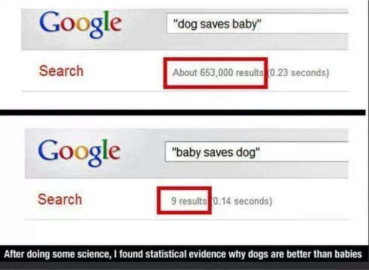 Evidencia perros son mejor que los humanos