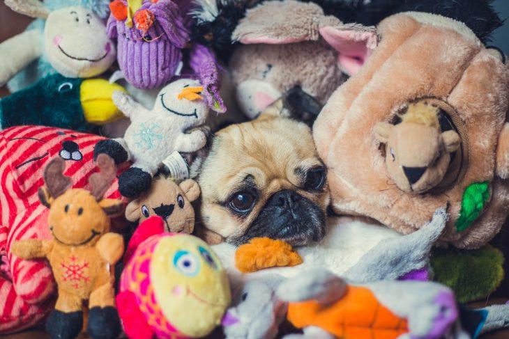 Perro pug rodeado de peluches