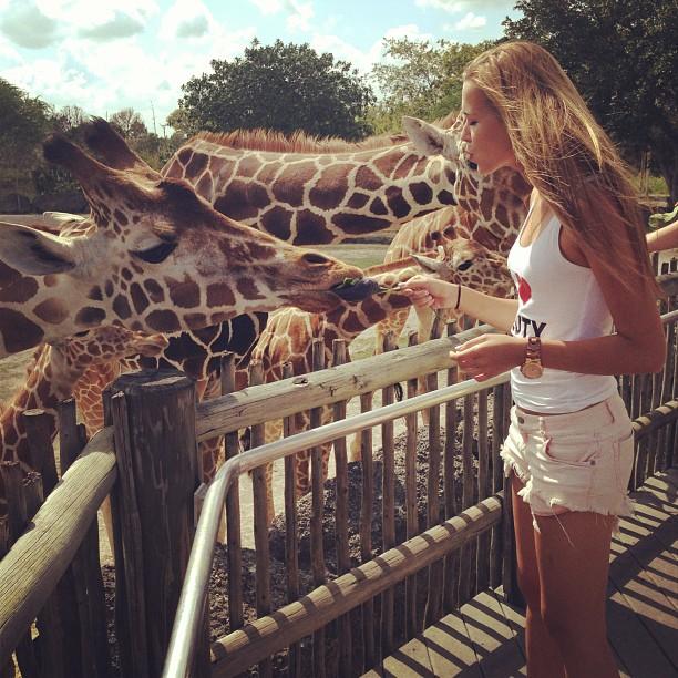 Chica alimentando a una jirafa