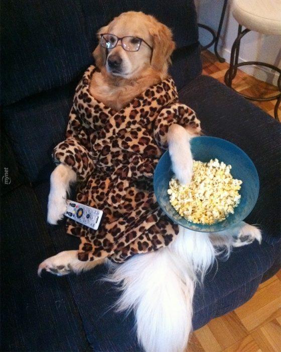 perro vestido sentado en sillón comiendo paomitas